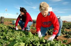 lavoratrici-agricole