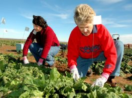 lavoratrici agricole - flaica lazio